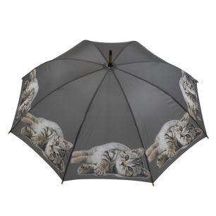 Umbrella tabby laying