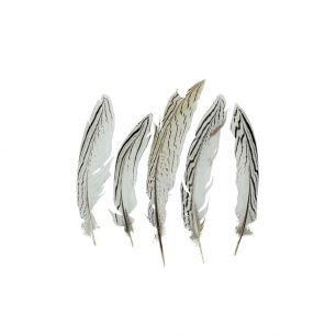 Feather pheasant silver 18cm (5pc.) (lophura nycthemera)