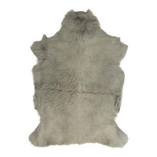 Fur goat grey (capra aegagrus hircus)