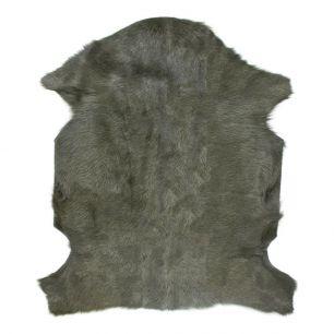 Fur goat green (capra aegagrus hircus)