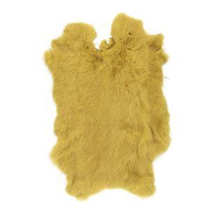 Fur rabbit yellow gold (oryctolagus cuniculus)