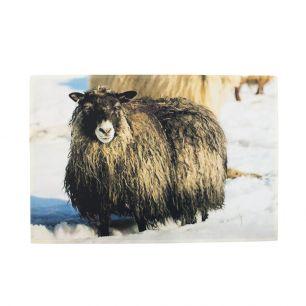 Doormat snow iceland sheep