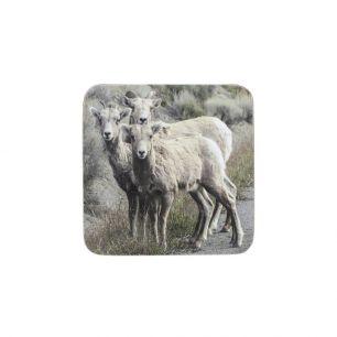 Coaster 3 sheep (6)