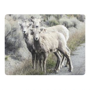 Placemat 3 sheep (4)